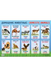 Домашние животные / Domestic animals