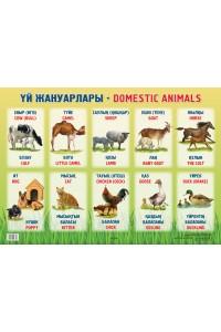 Үй жануарлары / Domestic animals
