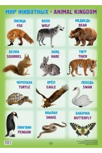 Мир животных / Аnimal kingdom