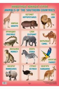 Животные южных стран / Аnimals of the southern countries